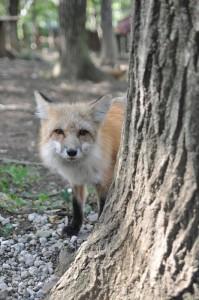 20170216_fox_a