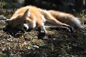 20170216_fox_b2