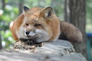 20170216_fox_c2