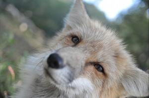 20170216_fox_d3